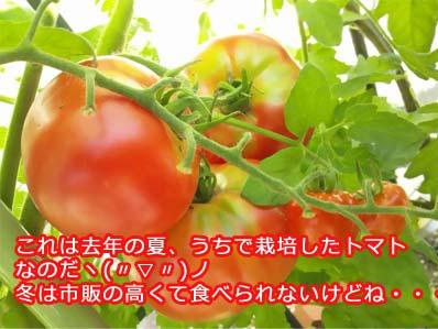 美白食材定番 トマト